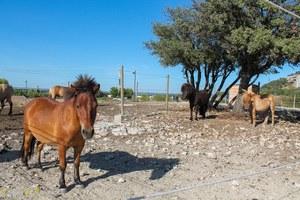 Ecurie de Tam - Centre équestre à Gignac-la-Nerthe