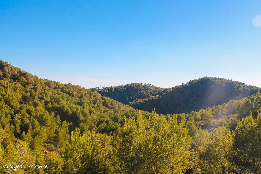 Forêt - Ensuès-la-Redonne
